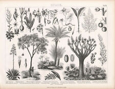 1870. Antique engraving print. BOTANY. ALOE. PALMS. MAY BELLS. LENT LILY etc