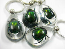 14PCS SUPER BEETLE EMERRALDINSECT REAL GREEN BEETLES CLEAR DROP STYLY KEY-CHAINS