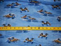Lakeside Duck Ducks Loon Loons Mallard Greenhead QT 22222-BJ Cotton Fabric