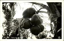 Coconuts Honolulu ~ RPPC real photo by Kodak Hawaii ~ vintage postcard