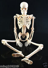 "Small Human Skeleton on Stand - Anatomical Model 18""Inch - Medical Anatomy"