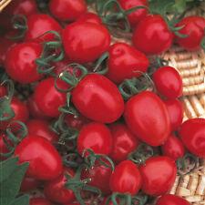 Tomate-Alerta Roja - 25 Semillas