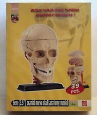 """Elenco Skull Model Cranial Nerve Skull Anatomy 3.5"""" NIB Edu Toys"""