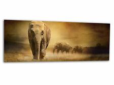 Glas-Bild Wandbild AFRIKA ELEFANTEN AG-00261 125 x 50cm
