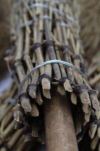 40 Bambus - Besen Reisigbesen Hexenbesen Hofbesen Strauchbesen Reiser