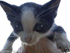 Sponsor Trubby's Surgery Vet Care Remembrance Cat Rescue Donation Rec Photo