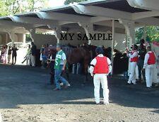 AMERICAN PHAROAH BELMONT STAKES TRIPLE CROWN HORSE RACE 8 x 10 PADDOCK PHOTO #8