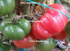 Red Brandywine Tomato - It has an Excellent Combination of Sweetness & Acidity!!