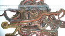 Live Ragworm Sea Fishing Bait