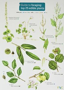 Guide to Foraging: Top 25 Edible Plants (Chart) by Cremona, Clare Book The Cheap