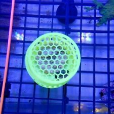 Fluorescent Mushroom Coral Boxes Small, Medium & Large