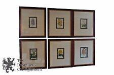 6 Horto Van Houtteano Framed Botanical Tropical Colored Lithograph Prints Plants