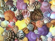 """SCALLOP SHELLS Down East Crafts 550 Pieces Jigsaw Puzzle 18"""" X 24"""" USA ~EUC~"""