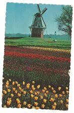 DeZwaan (The Swan) Windmill Dutch Holland MI Michigan  Postcard