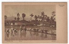 Rice Planting Rijstplanten Garoet Dutch East Indies Java Indonesia postcard