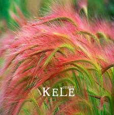 100 Pcs Seeds Foxtail Barley Ornamental Grass Plants Hordeum Jubatum Rare Garden