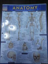 Barcharts Anatomy Quick Study Guide