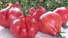 10 graines de tomate rare Figue Rose généreuse délicieuse heirloom méth.bio
