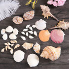 Mixed Beach Sea Shells Natural Craft Shell Mix Aquarium Wedding Table Decoration