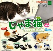 Desktop Cat Lover Decorator 6pc Set for you PC Toy Figure Figurine Collectible