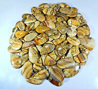WHOLESALE LOT NATURAL PETRIFIED AMERICAN PICTURE JASPER CABOCHON LOOSE GEMSTONE