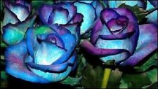 Blues Blue Rose Seeds (20) - USDA Inspected - Free Shipping - USA Seller