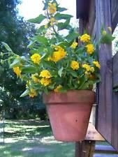 Set of 6 Clay Flower Pot Hangers Metal Urban Garden Wall Hooks New LOOK!