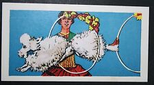 Performing Circus Poodle      Vintage Colour Card # EXC