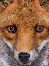 FOX FACE IMPRINT - 3D MOVING PICTURE 300mm X 400mm (NEW)