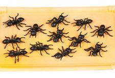 12 Black Plástico Halloween HORMIGAS Accesorio Decoración Big 4cm tamaño Araña