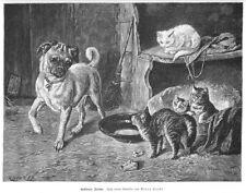 Mops und Kätzchen - Gestörter Friede, Original-Holzstich von 1898