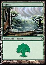 Forest // Foil // NM // Premium Deck Series: Sliver // engl. // Magic Gathering