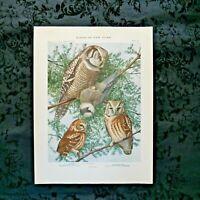 Antique 1915 Louis Agassiz Fuertes Print Plate# 55 Hawk Owl.....................