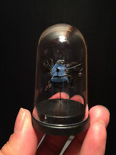 Cabinet of curiosities Insect Globe Bee blue Xylocopa caerulea Indonesia