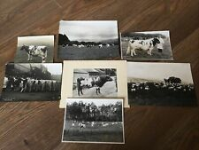 More details for selection of  vintage ayrshire cattle photographs