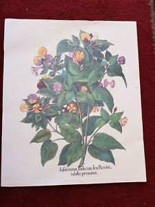 Tavola botanica dell'Hortus Eystettensis ABOCA stampa quadro INDICUM FLORE FLAVO