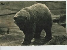 1931 ZOO RUSSIA Polar Bear RARE OLD RUSSIAN vintage Postcard