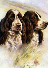 Vintage Art~Beautiful English Springer Spaniel Puppy Dogs~New Large Note Cards