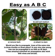 Clamshell Air Propagation  & Cloning Kit - Tree, Vine & Shrub - (Size - SMALL)