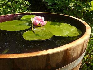Demi-tonneau en bois de chêne, mimi-étang,pot de fleurs,Mini bassin, nature