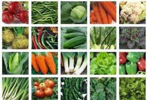 Herb & Vegetable Seeds Collection 100+ Varieties - Basil Parsley Mint Carrot