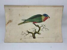 Purple-Headed Parrakeet - 1783 RARE SHAW & NODDER Hand Colored Copper Engraving