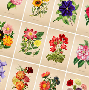 Vintage Flower Poster Prints - A4 A3 A2 Posters - Botanical Wall Art Home Decor