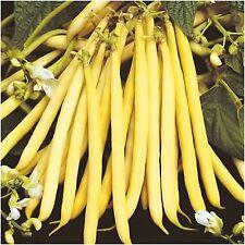 BUTTER Bush Bean Cherokee Wax (50 seeds)Organic Heirloom