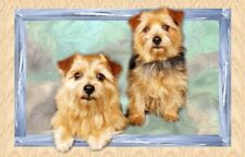 Norfolk Terrier A6 Blank Card By Starprint - Auto combined postage