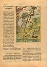 Venomous Snakes Serpent Venimeux Python Boa Crotale Naja Aspic 1929 ILLUSTRATION