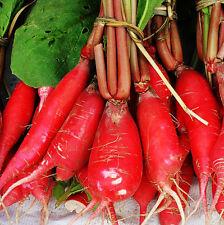100 Red Turnip Seeds Radish Raphanus Sativus Organic