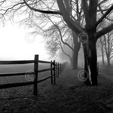 Corner Fence by Harold Silverman Art Print B/W Photo Country Tree Poster 16x16