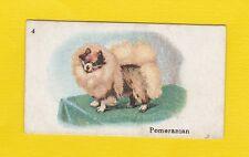 DOGS  -  B.A.T.  CO.  LTD.  -  SCARCE  DOG  CARD  -  POMERANIAN  -  1913