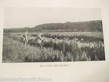 """Antigua Impresión 1907 Pesca Vintage imagen """"en los sedges"""" De Pesca Con Mosca"""